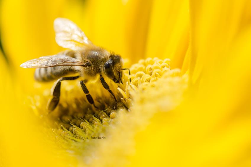 Bei der Gartenplanung berücksichtigen: Insekten sind mitbewohner