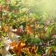 Den eigenen Garten an den Klimawandel anpassen