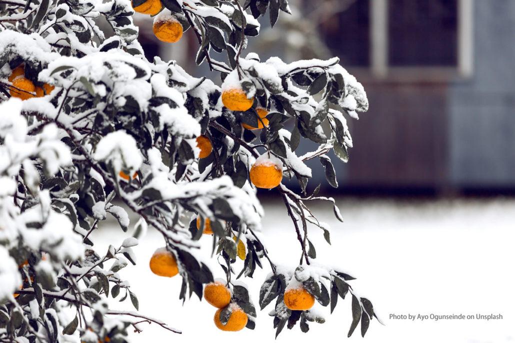 Garten auf den Winter vorbereiten