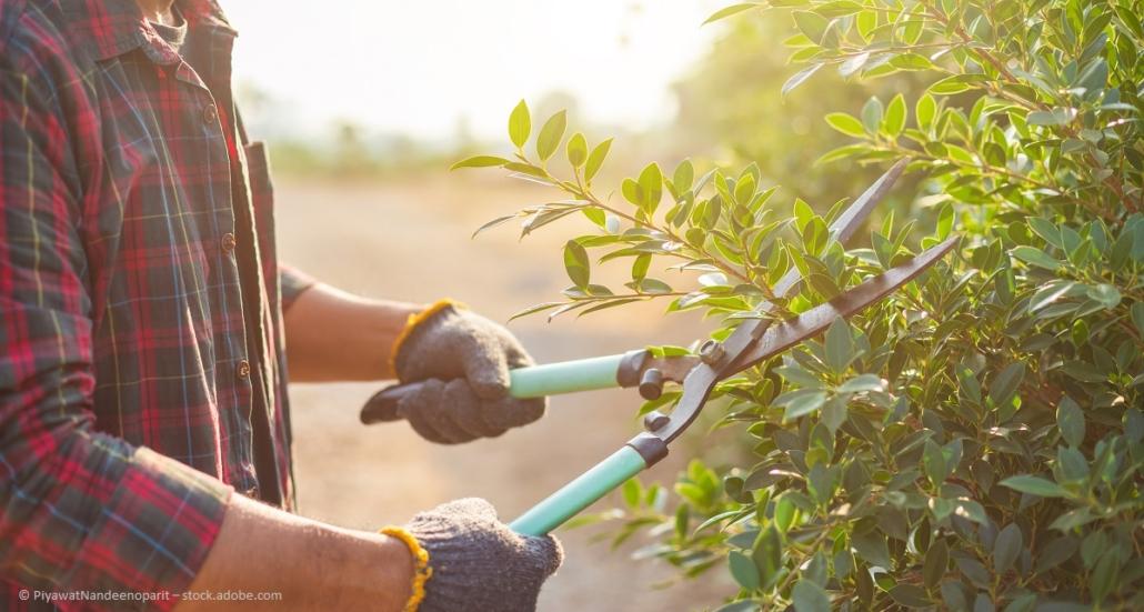 Gartenbau, Gartengestaltung und Pflege.