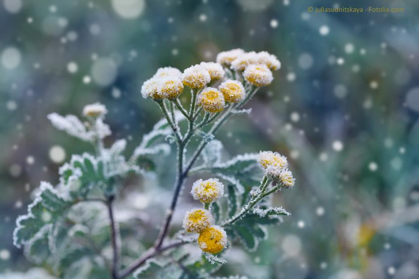 Gartenpflege, auch im Winter ein Muss