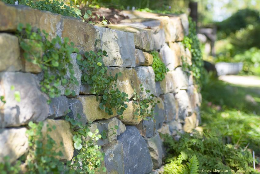 Sichtschutz Wand für den Garten aus einer natürlicher Mauer