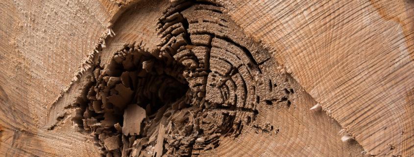 Holz, ein Rohstoff auch für den Hausbau