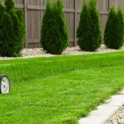 Der Gartenbauer kennt die Bedürfnisse der Pflanzen.