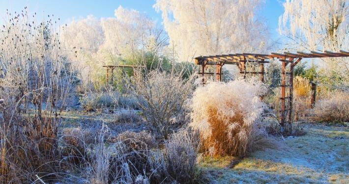 Naturgarten im Winter - pflegebedürftige Natur