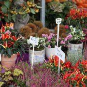 Auf was muss man beim Pflanzenkauf achten?